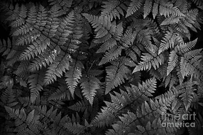 Ferns Print by Steve Patton