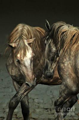 Grey Horse Photograph - Flamenco by Angel  Tarantella