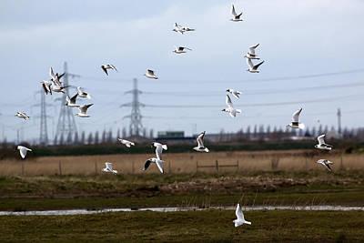 Target Threshold Watercolor - Flock of Gulls by Les OGorman