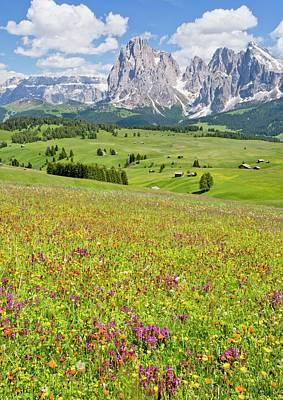 Flowery Alpine Meadow Print by Bob Gibbons