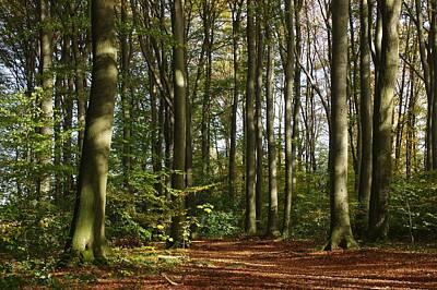 Buche Photograph - Forest by Gabi Siebenhuehner