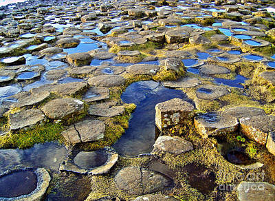 Photograph - Giant's Causeway Reflection by Nina Ficur Feenan