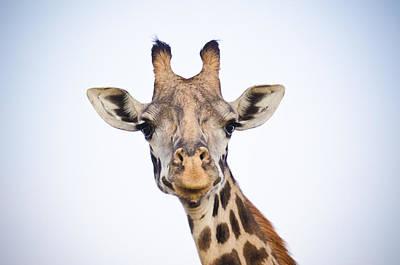 Giraffe Print by Mesha Zelkovich