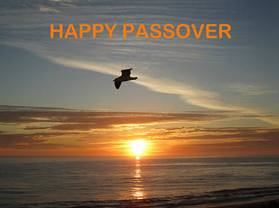 Photograph - Happy Passover by John Shiron