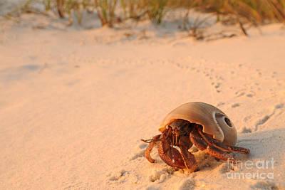 Photograph - Hermit Crab by Scott Linstead