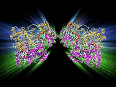 Hiv Reverse Transcription Enzyme Print by Laguna Design