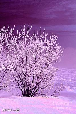Painting - Hoar Frost On The Lilac Bush by J McCombie