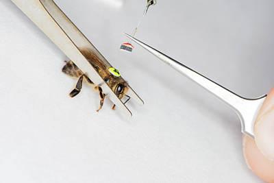 Honeybee Radar Tagging Art Print