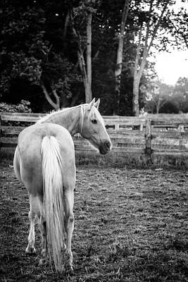 Photograph - Horse On A Farm by Alexey Stiop