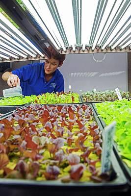 50s Photograph - Hospital Organic Farm by Jim West