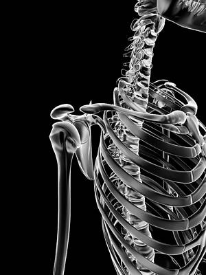 Human Shoulder Joint Art Print