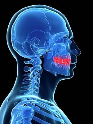 Human Teeth Art Print by Sebastian Kaulitzki