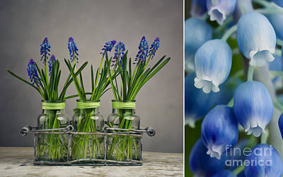 Grape Digital Art - Hyacinth Still Life by Nailia Schwarz