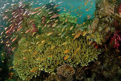 Raja Ampat Photograph - Indian Ocean, Indonesia, Raja Ampat by Jaynes Gallery