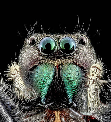 Jumping Spider Art Print by Us Geological Survey