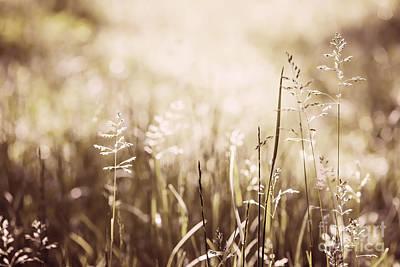 June Grass Flowering Art Print by Elena Elisseeva