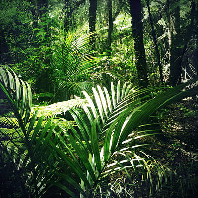 Ecology Photograph - Jungle Leaves by Les Cunliffe