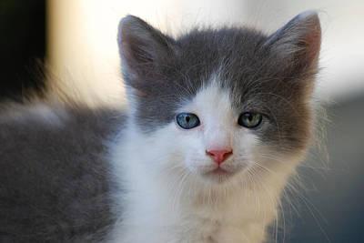 Photograph - Kitten by Larah McElroy
