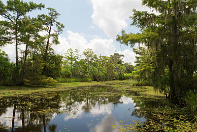 Swampland Photograph - La, Lafitte, Airboat Swamp Tour by Jamie and Judy Wild