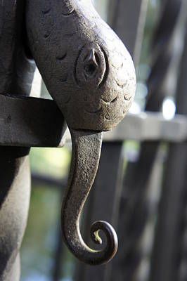 Photograph - Snake In The Gate by Laurie Perry