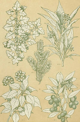 Leaves From Nature Art Print by English School