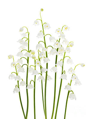 Abstract Stripe Patterns - Lily-of-the-valley flowers arrangement by Elena Elisseeva