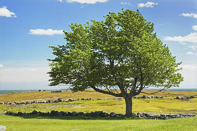 Photograph - Lone Tree With Blue Sky In Blueberry Field Maine by Keith Webber Jr