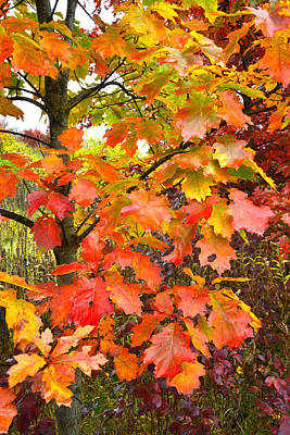 Mchenry County Fall Color Art Print by Ray Mathis
