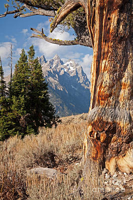 Photograph - Old Patriarch Grand Teton National Park by Fred Stearns