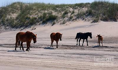 Outer Banks Wild Horses Art Print by Mike Baltzgar