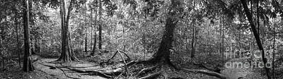Panorama Of Rainforest Original by Atiketta Sangasaeng