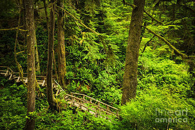 Path In Temperate Rainforest Art Print by Elena Elisseeva