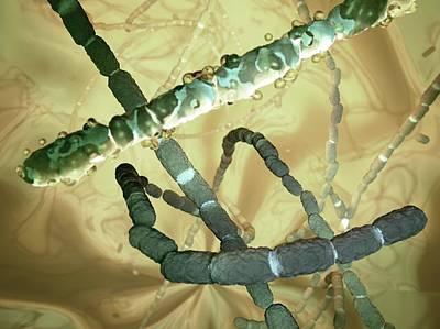 Bacteria Photograph - Peptostreptococcus Sp. Bacteria by Hipersynteza