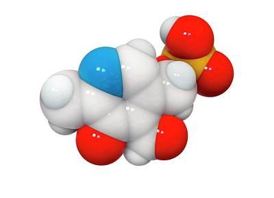 Molecule Photograph - Pyridoxal Phosphate Molecule by Ramon Andrade 3dciencia