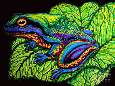 Rain Forest Drawing - Rainbow Frog by Nick Gustafson