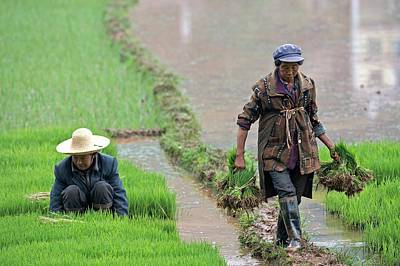 Rural Landscapes Photograph - Rice Cultivation In Yunnan Province by Tony Camacho