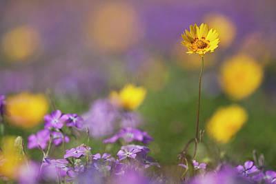 Roadside Wildflowers In Texas, Spring Art Print