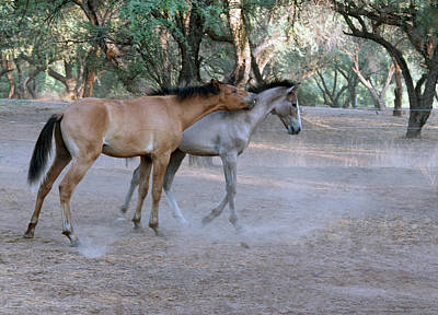Photograph - Salt River Wild Horses by Tam Ryan