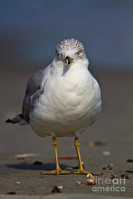 Photograph - Seagull Vi by Gene Berkenbile