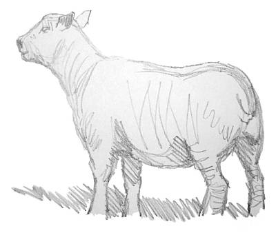 Lamb Drawing - Sheep Sketch by Mike Jory