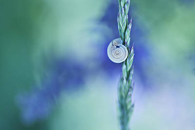 Snail On Grass Print by Nailia Schwarz