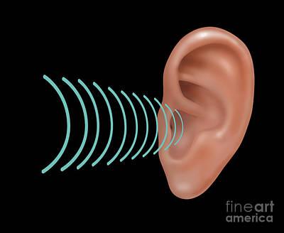 Sound Entering Human Outer Ear Art Print by Gwen Shockey