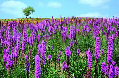 Scenery Photograph - Summer In Hokkaido by Frank Chen
