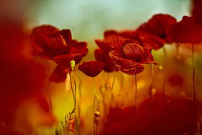 Meadows Photograph - Summer Poppy by Nailia Schwarz