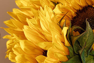 Lady Bug - Sunflower by Peter Lakomy