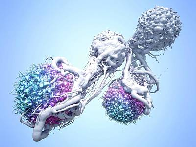 T Cells Attacking Cancer Cells Art Print by Maurizio De Angelis