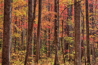 Tennessee, Great Smoky Mountains Art Print by Jamie and Judy Wild