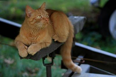 5-toe'd Orange Cat Of The Marina Art Print