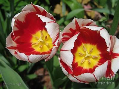 Triumph Tulip Named Carnaval De Rio Art Print