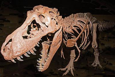 Photograph - Tyrannosaurus Rex by Millard H Sharp